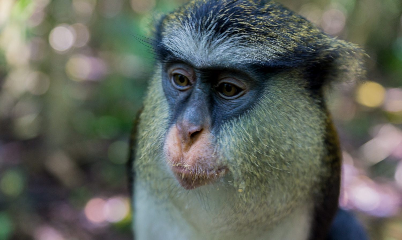 monkey-at-lekki-conservation-centre