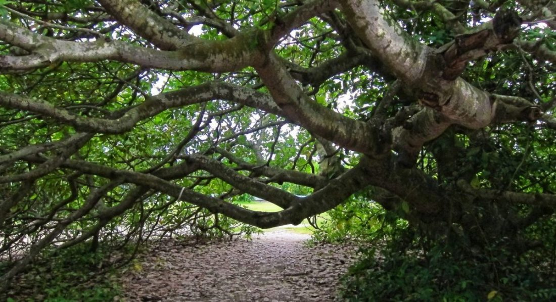 park-in-nigeria-tree-canopy